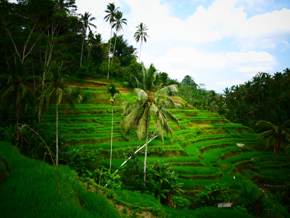 Travel the World | Bali, Indonesia